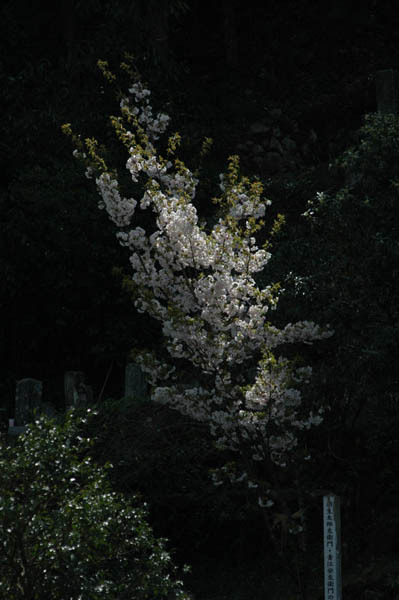 2005_0417_141859AA.jpg