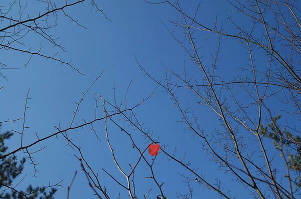 ハート型の枯葉.jpg