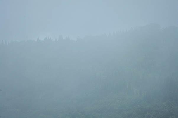 吉和の森.jpg