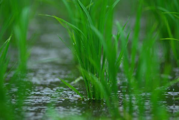 小雨の旋律.jpg
