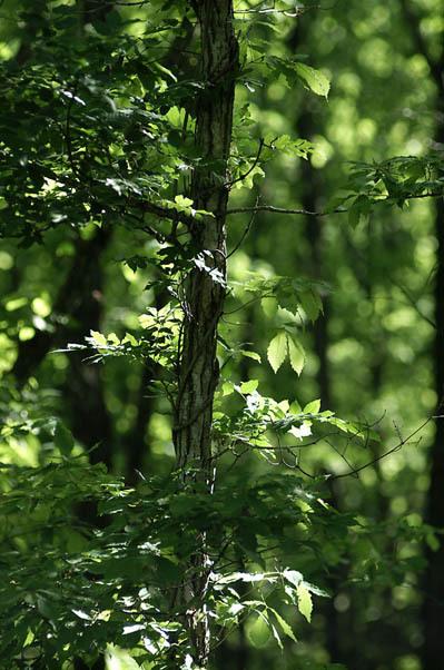 森の空気.jpg
