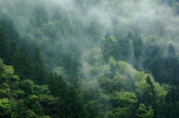森を渡る霧.jpg