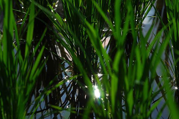 水、光る.jpg