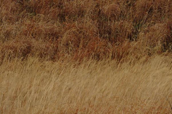 秋の印象.jpg