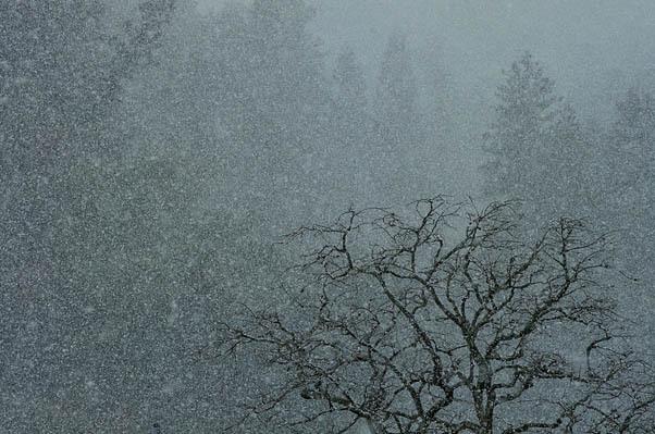 粉雪.jpg