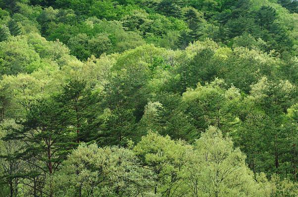 若葉の森.jpg