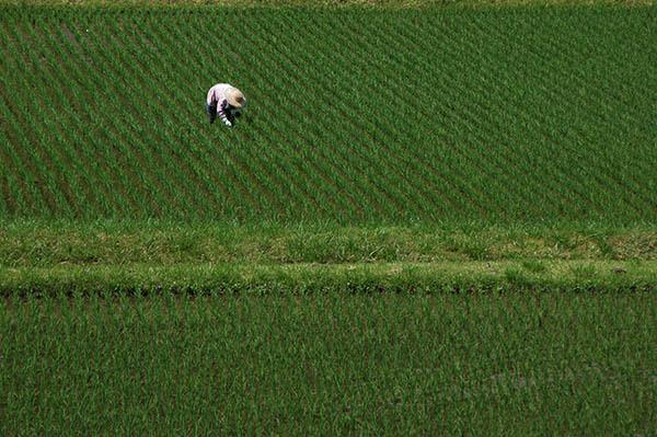 農に生きる.jpg