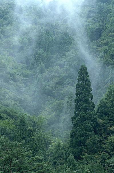 霧流れる.jpg