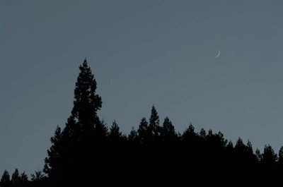 眉月の森.jpg